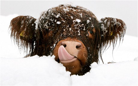 snow-scotland_2184190c[1]
