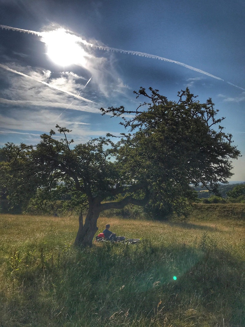 A room with a view, microadventure, tree, bivi
